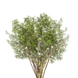 Naked Seeded Eucalyptus - 50 Stems