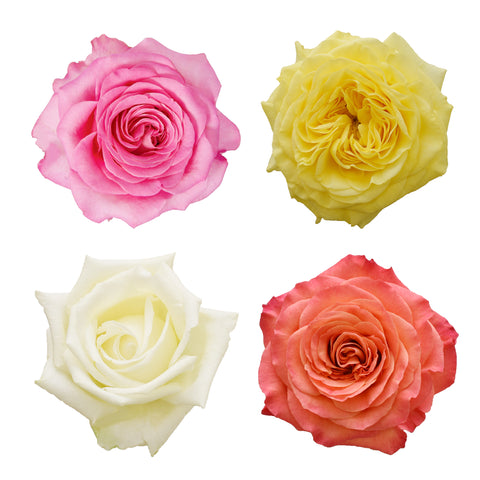 Dozen Garden Rose Assorted