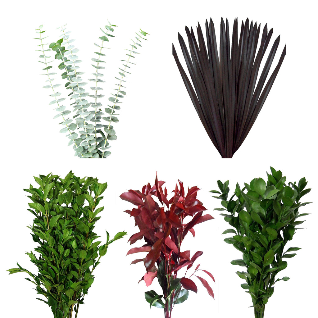 Assorted Ruscus, Eucaliptus, Viburnium, Purple Flax & Photinia Combo Box