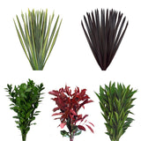 Assorted Photinia, Cocculus, Ruscus & Flax Combo Box