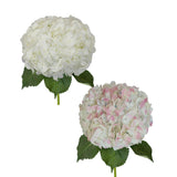 Hydrangeas Jumbo White and Antique Pink - 12 Stems