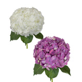 White and Elite Purple Hydrangeas - 30 Stems