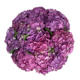 Elite Purple Hydrangea - 12 stems