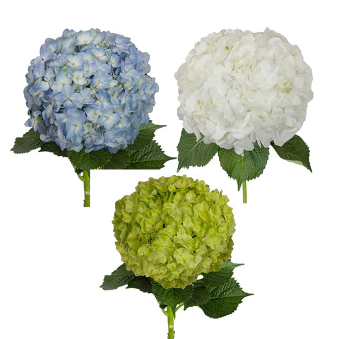 Lime Painted Hydrangeas