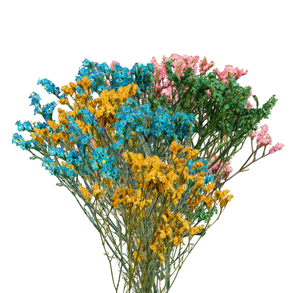 Limonium Tinted Assorted Colors,