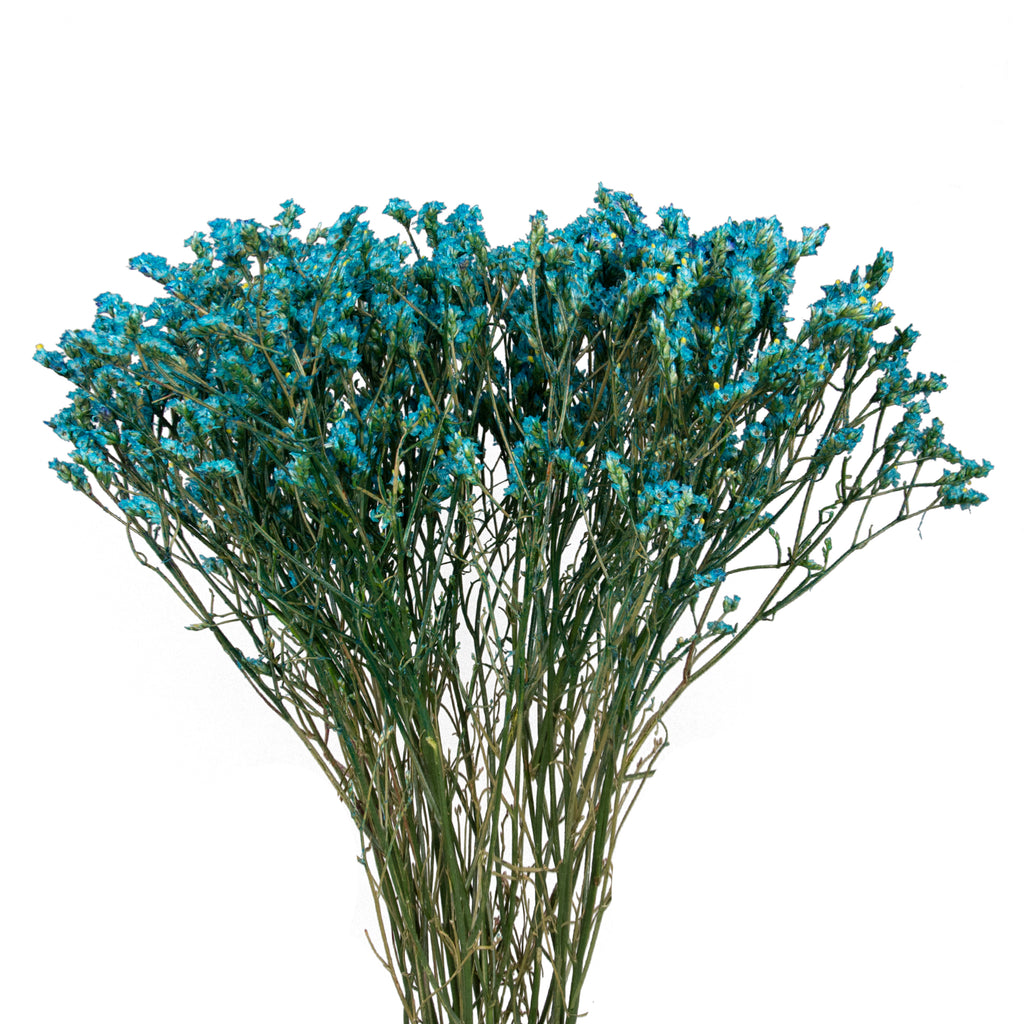Limonium Tinted Light blue,