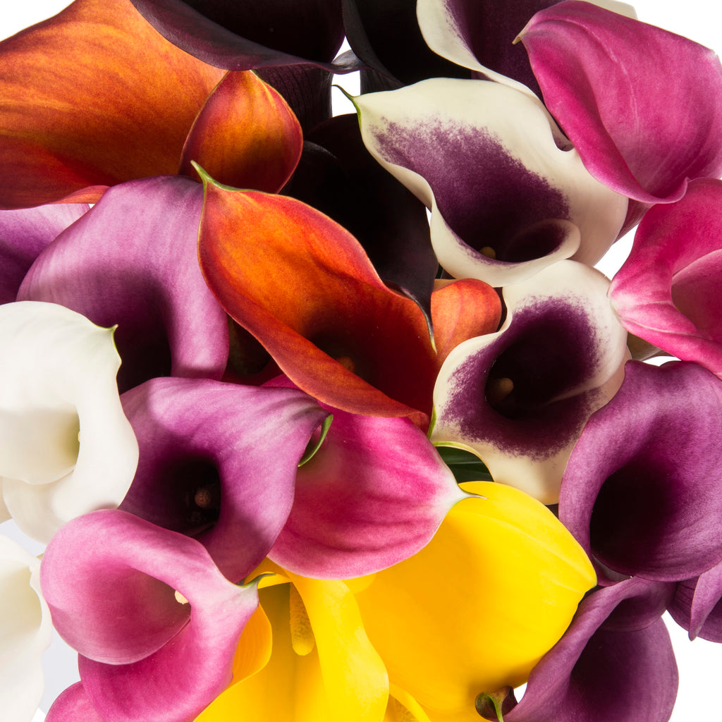 Mini Calla Lilies - Assorted Colors