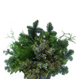 Mixed Evergreens 10 Lb