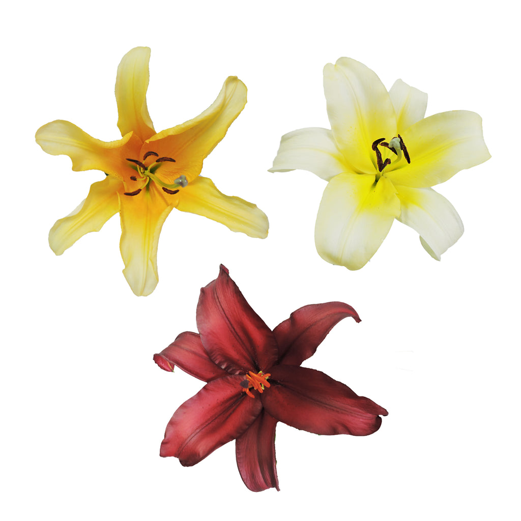O.T. Lilies - Fall Assorted - Pack 30