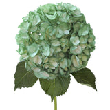 Green Painted Hydrangeas