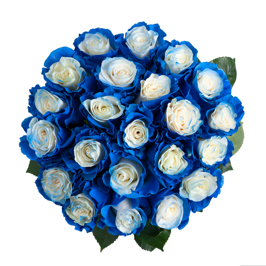 Blue Fairy Painted Roses