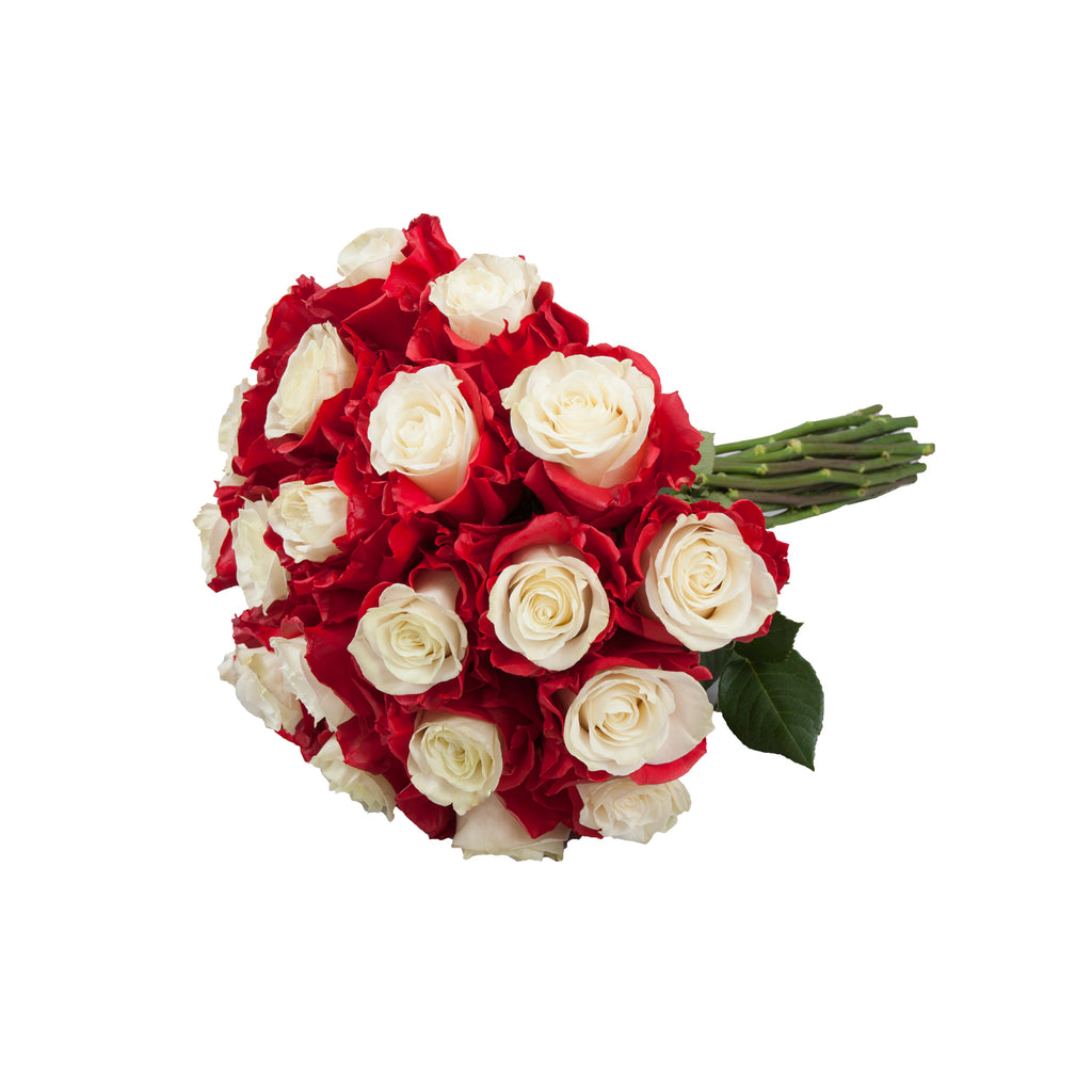 Marshmallow White & Red Painted Roses