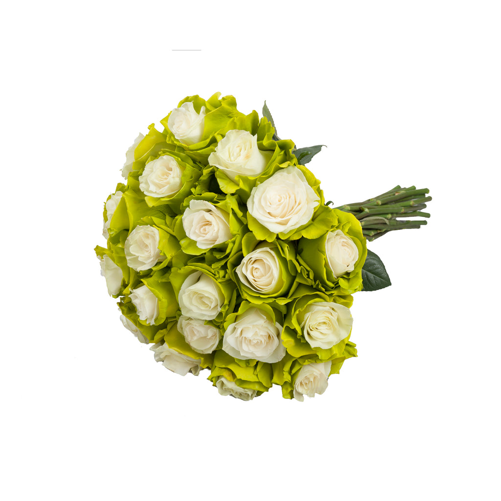 Marshmallow White & Lime Green Painted Roses