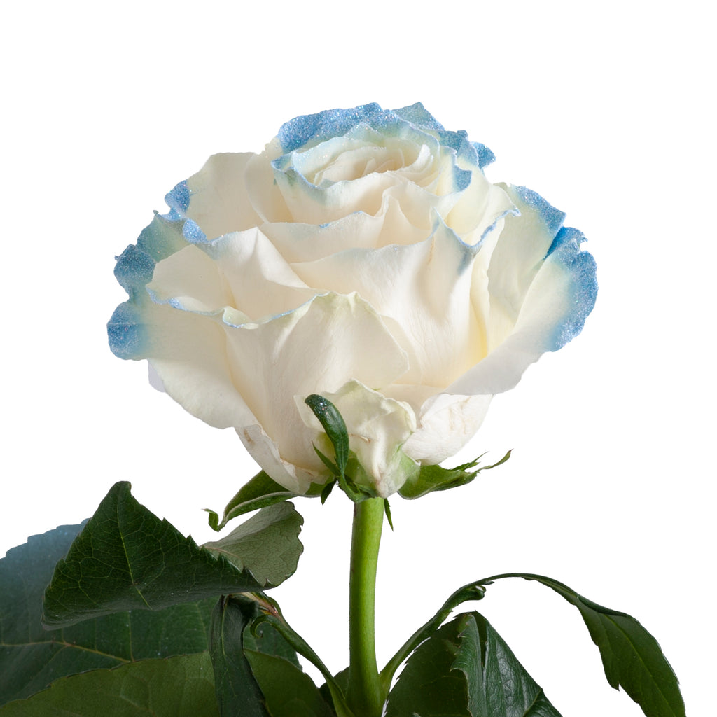 Neige Blue Painted Roses