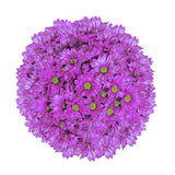 Lavender Painted Pompom Daisy Mums