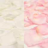 White and Pink Rose Petals