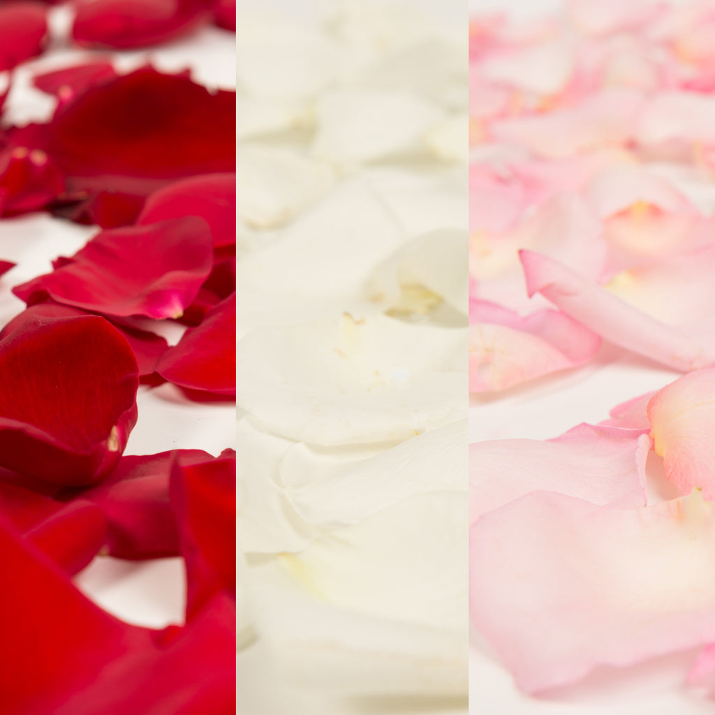 Red, White and Pink Rose Petals
