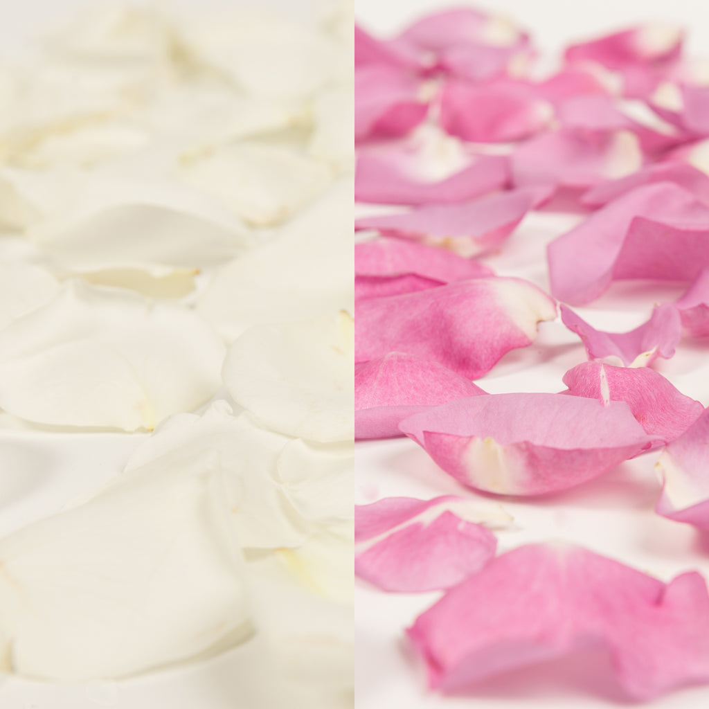 White and Lavender Rose Petals