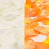 White and Orange Rose Petals