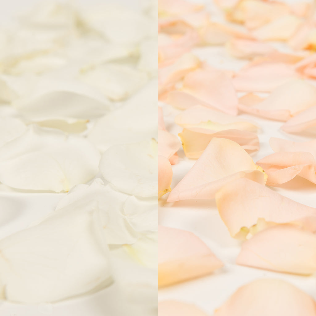 White and Peach Rose Petals