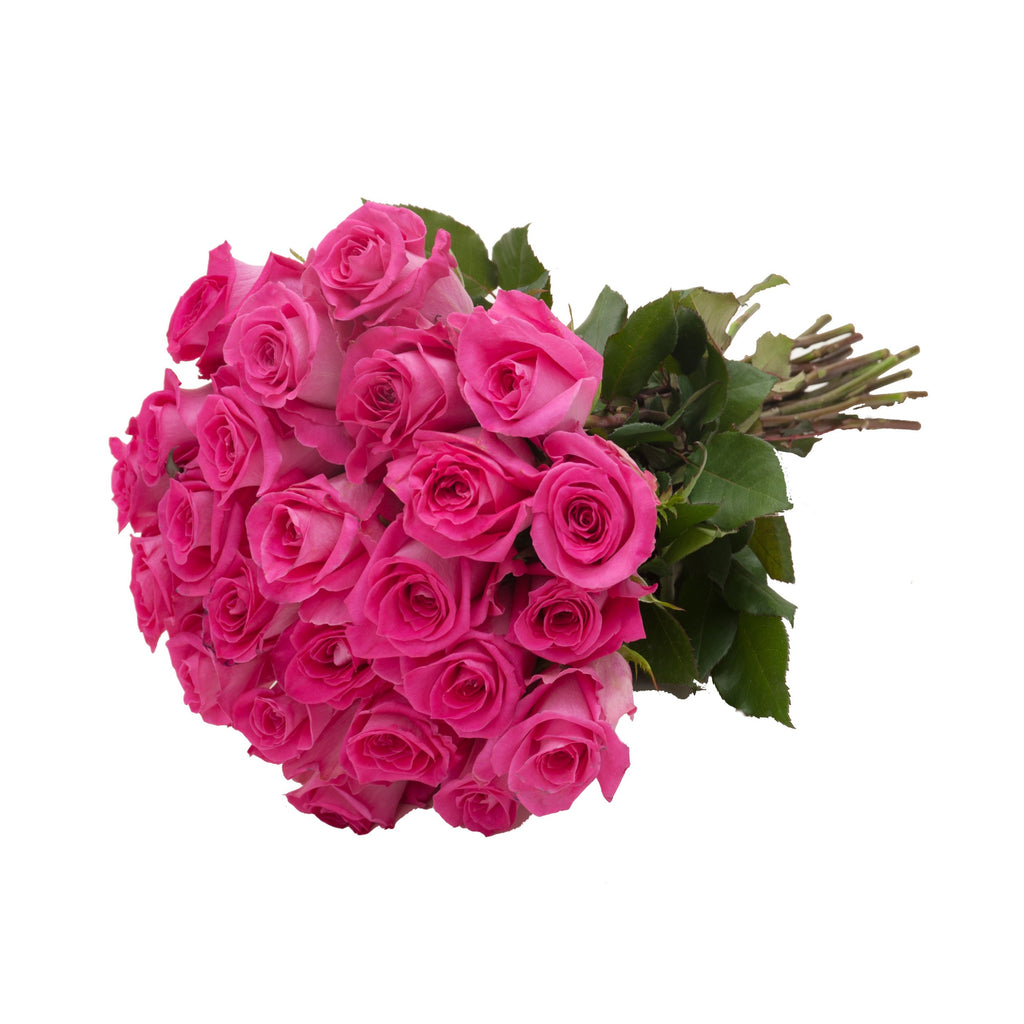 24 Farm Fresh Hot Pink Roses Gift