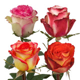 Natural Assorted Novelty Roses