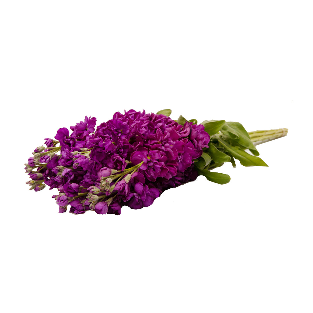 Stock, Reddish - 140 Stems