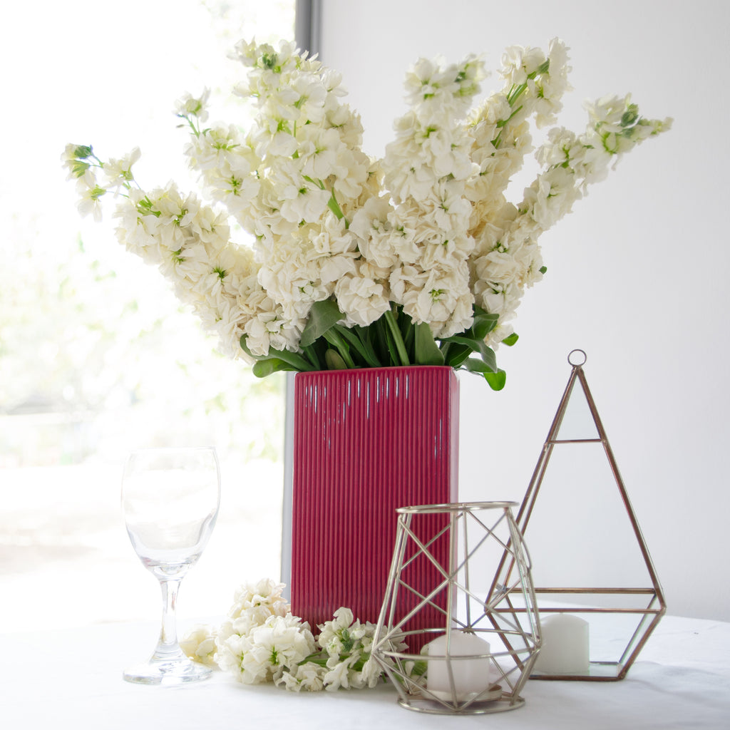 White Stock - 140 Stems