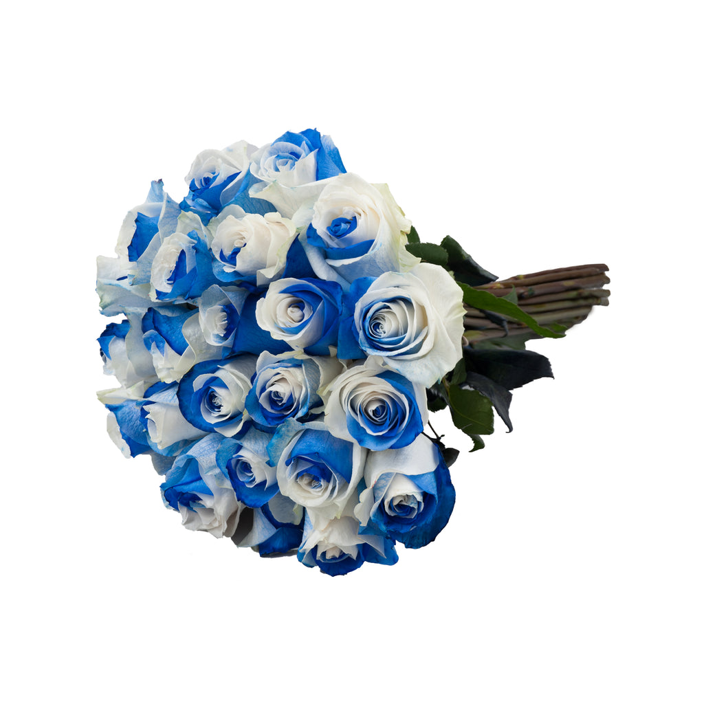 Blue White Bicolor Tinted Roses Premium Wholesale Flowers Free Shipping Bloomingmore