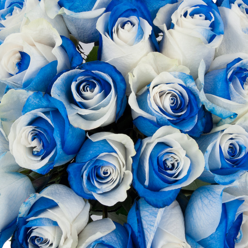 Dark Blue And White Flowers: Blue & White Bicolor Tinted Roses