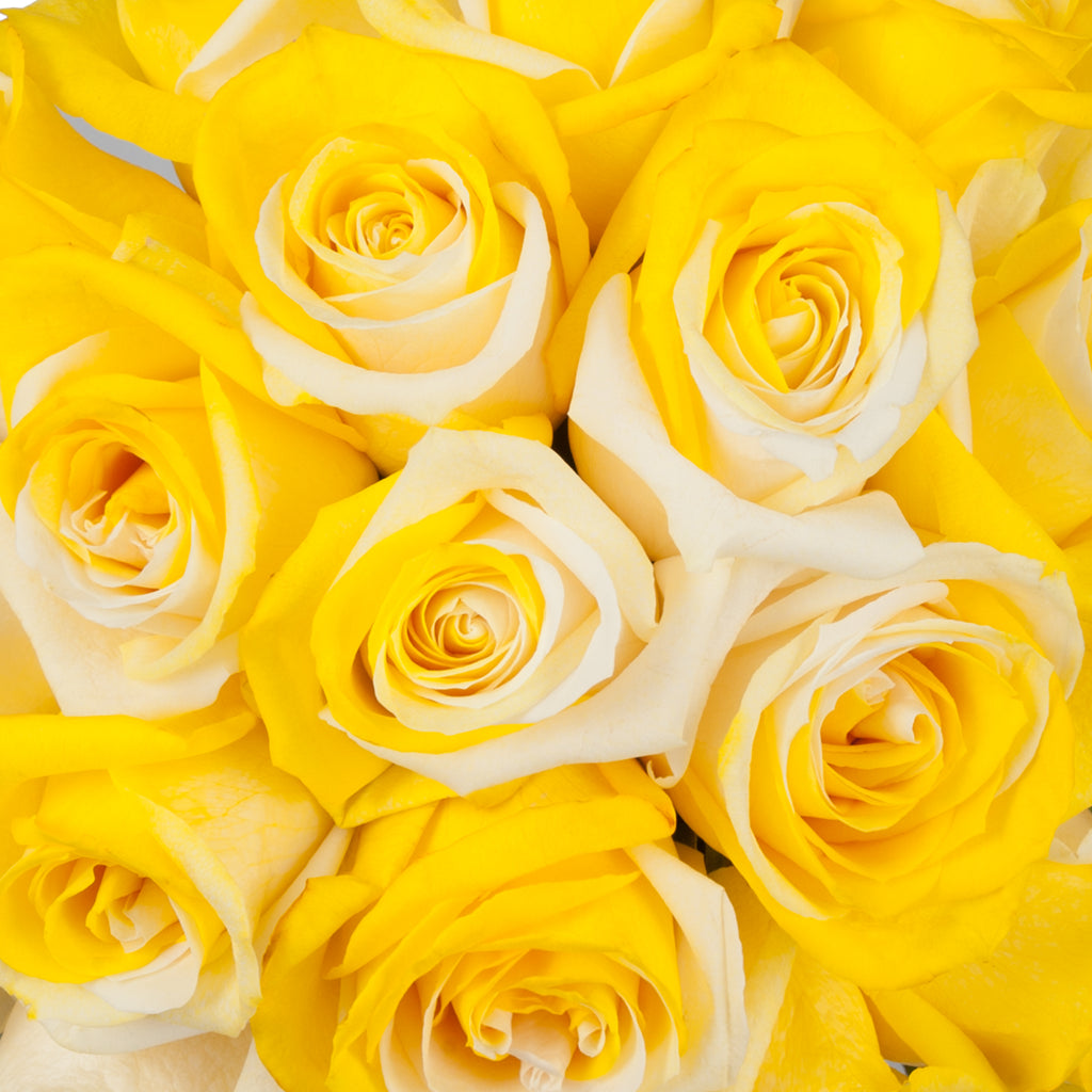 Yellow & White Tinted Roses