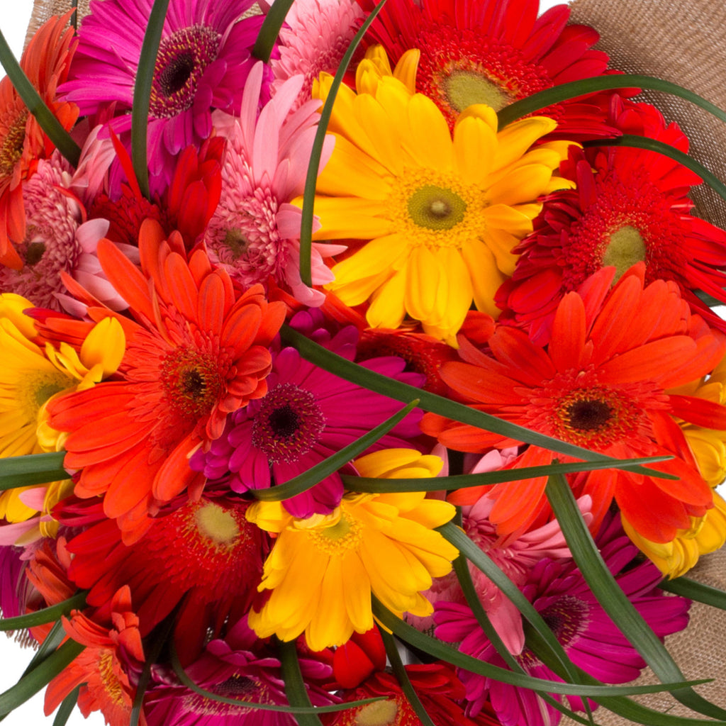Rainbow Gerbera Bouquet with Burlap - 4 Pack