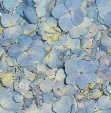 Blue Hydrangea Flower and Petals Combo