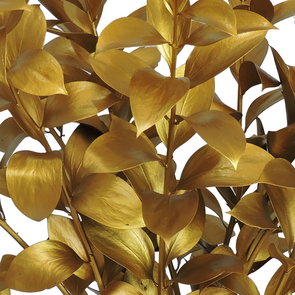 Gold Painted Ruscus