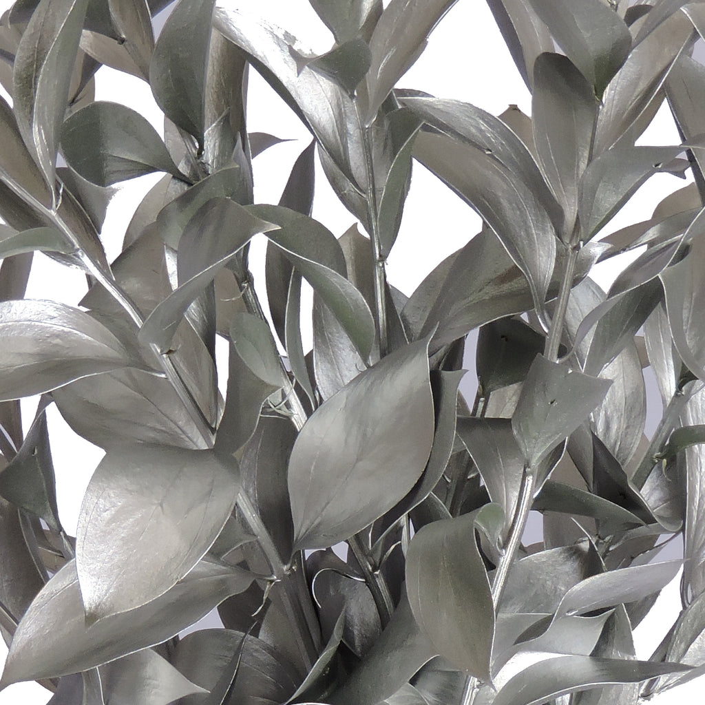Silver Painted Ruscus