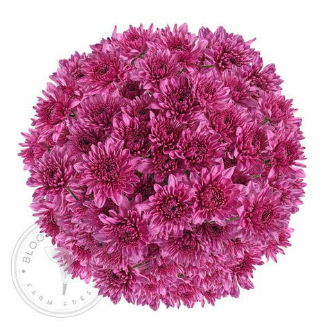 Hot Pink Tinted Pompom Cushion