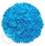Light Blue Painted Pompom Cushion Daisies Buy Bulk Wholesale Bouquets, Flowers & Greens