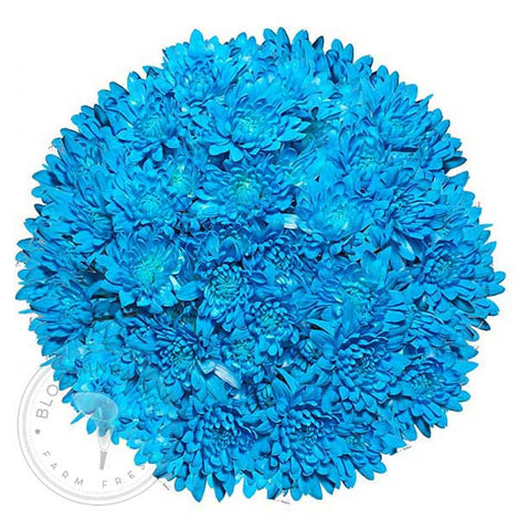 Light Blue Painted Pompom Daisy Mums