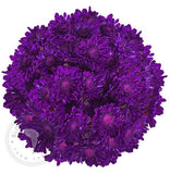 Purple Painted Pompom Cushion Daisies Buy Bulk Wholesale Bouquets, Flowers & Greens