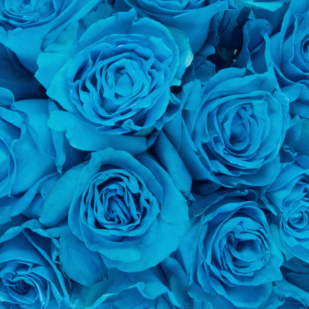 Turquoise Tinted Roses