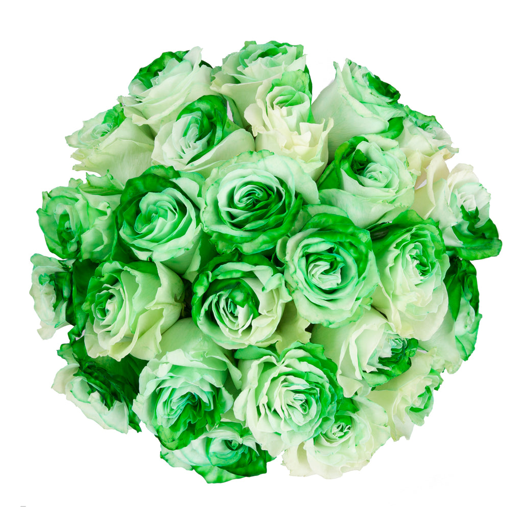 Green White Bicolor Tinted Roses Premium Wholesale Flowers Free Shipping Bloomingmore