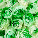 Green & White Tinted Roses