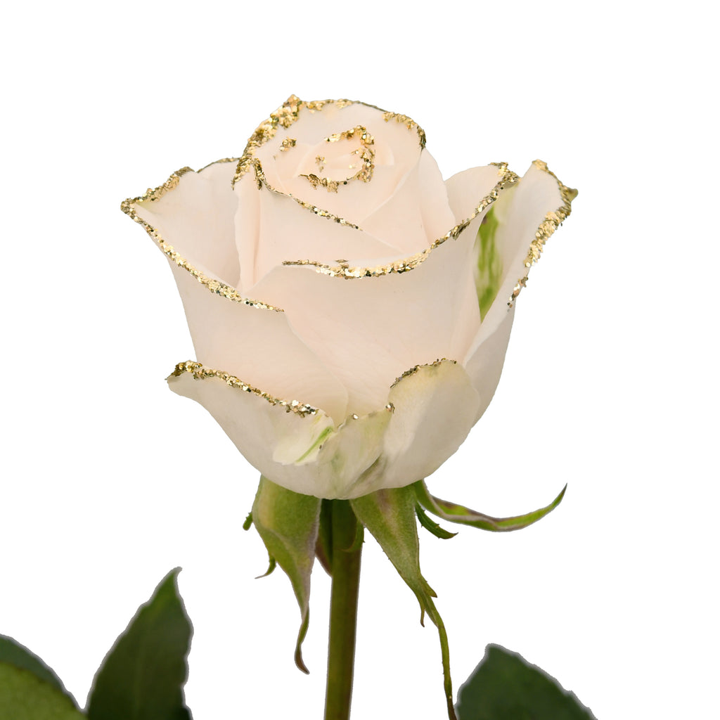 White Roses With Gold Glitter Premium Wholesale Flowers Free