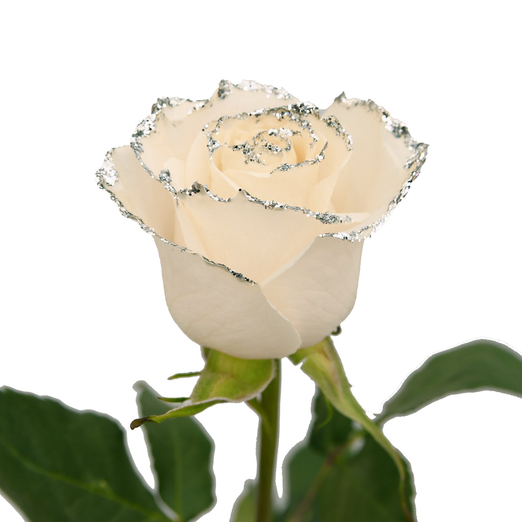 White Roses With Silver Glitter Premium Wholesale Flowers Free