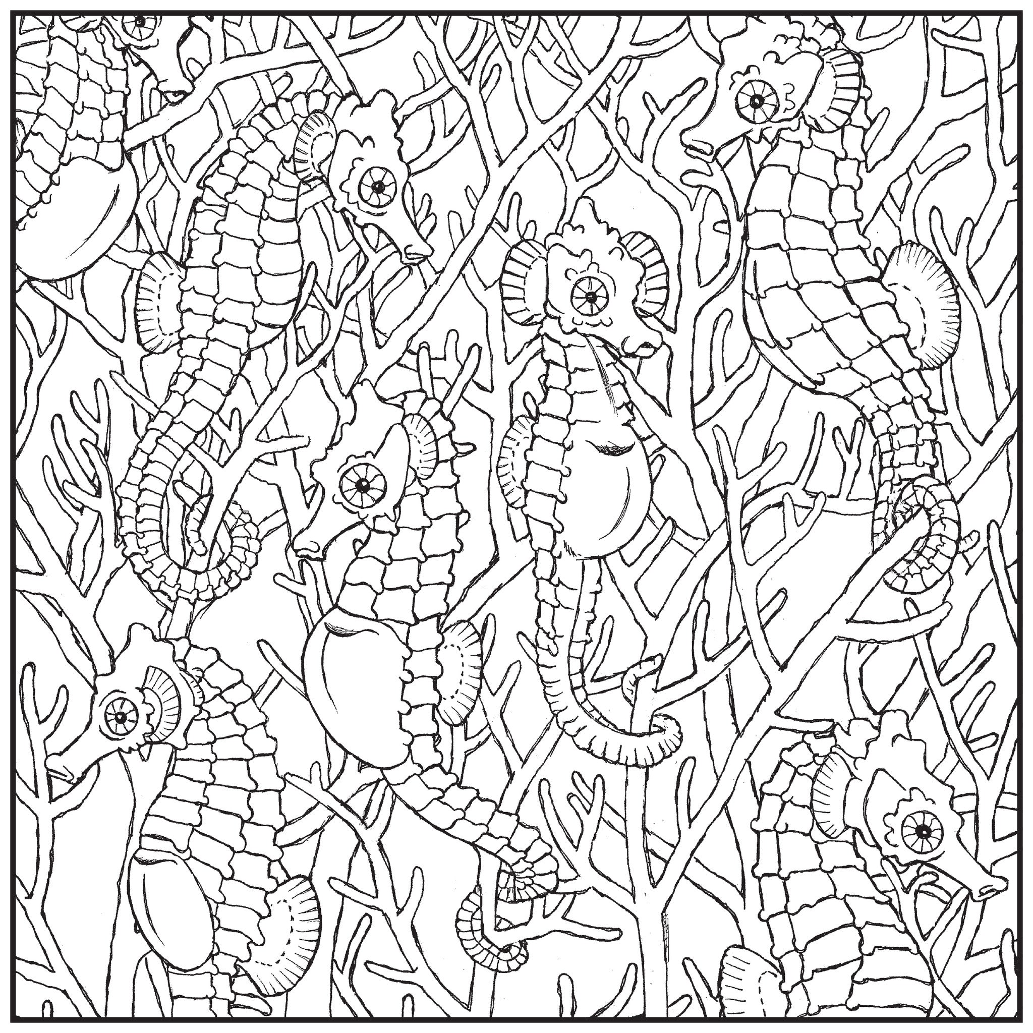 Color With Music Sea Life Adult Coloring Book Blank Page