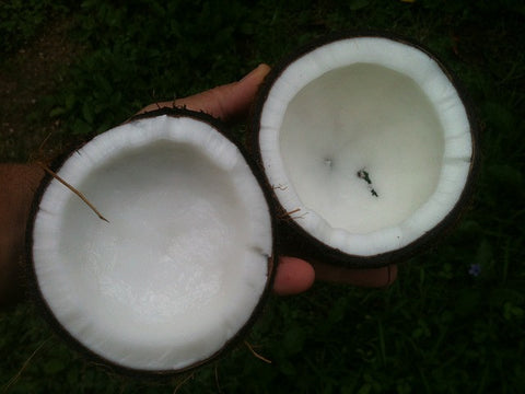 Two halves of a coconut