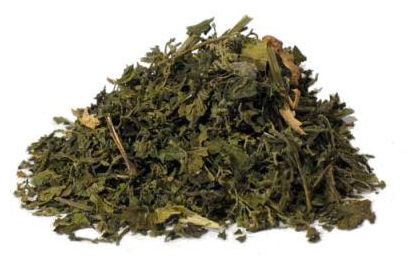 stinging-nettle-leaf-tea-pregnancy
