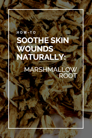 marshmallow root for wound healing