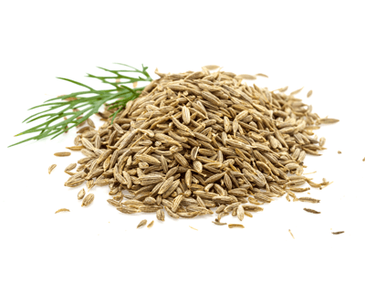 fennel for breast milk production