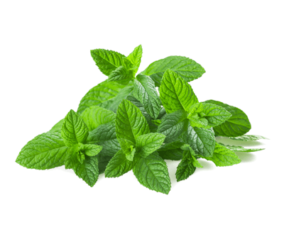 spearmint to help nausea